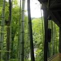 Photos: 雨後の竹