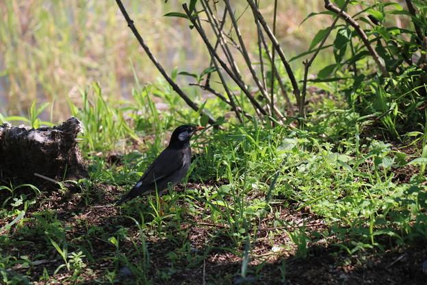 写真: 鳥002