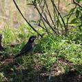 Photos: 鳥002