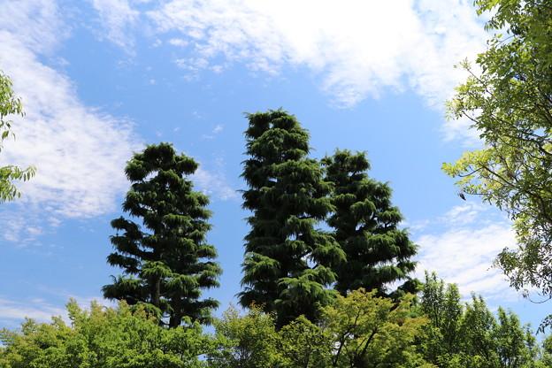 しんげ木の・・・(笑