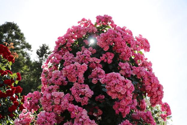 花漏れ陽♪