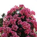 写真: 花漏れ陽♪