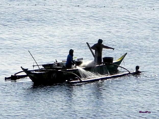 マニラ湾今日の漁獲