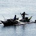 写真: マニラ湾今日の漁獲