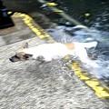 写真: 「真夏から雨季にウキウキ犬はしゃぐ」