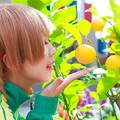 Photos: 檸檬