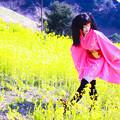 Photos: 菜の花綺譚