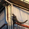 Photos: Godzilla