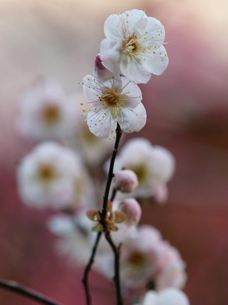 写真: せせらぎを彩る春の使者 *b