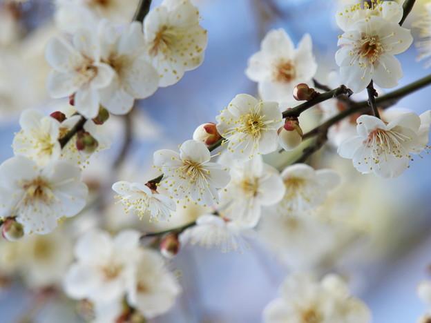 写真: 春よ来い~せせらぎの小径 *b