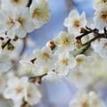 Photos: 春よ来い~せせらぎの小径 *b