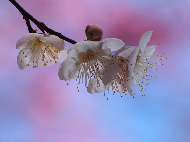 春よ来い~せせらぎの小径 *e