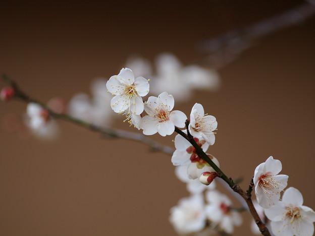 写真: 春の使者からご挨拶