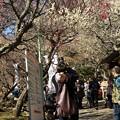 Photos: 熱海梅園は4分咲き *b
