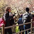Wonderful Japanese apricot ♪