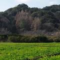 写真: みなみの桜と菜の花まつり 2018-b