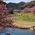 写真: 青野川の春色