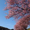 写真: 春の青空、春の香り