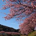 写真: 青野川は春の香り