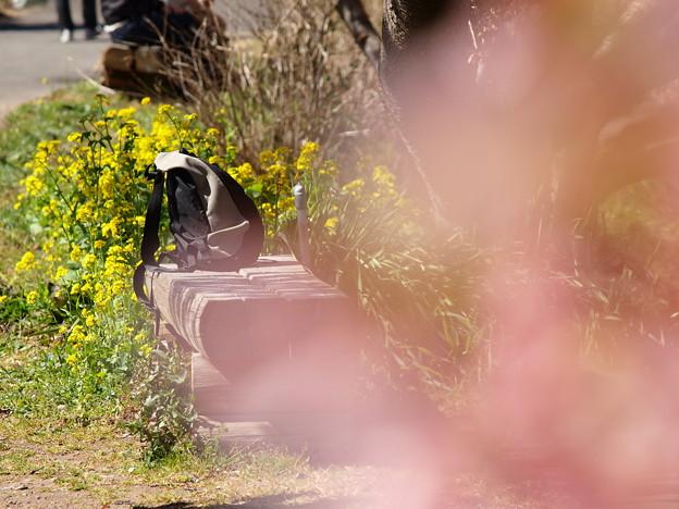 写真: 春の置き忘れもの?