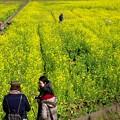 写真: 菜の花畑の人たち、犬たち