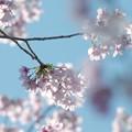 さくらの里の春