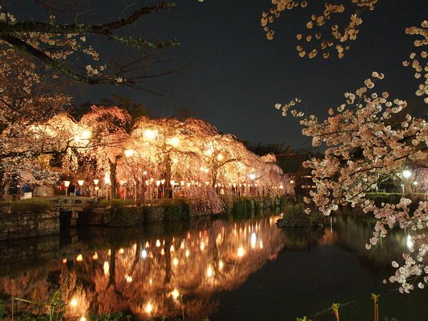 神池に映えるしだれ桜