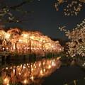 Photos: 神池に映えるしだれ桜