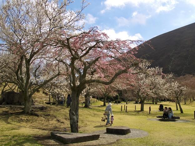 あっちの桜もねっ