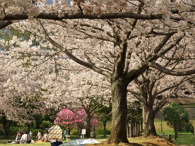 桜並木の人々