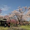 桜を愛でる人々