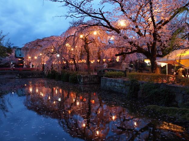 花びら散る夜桜の頃