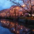 写真: 花びら散る夜桜の頃