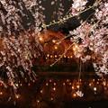 神池に映える夜桜の灯り