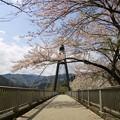 桜咲く、奥野エコーブリッジ