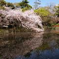 写真: 春の水鏡