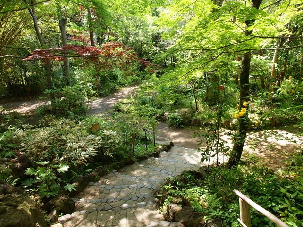 初夏の香り漂う庭園