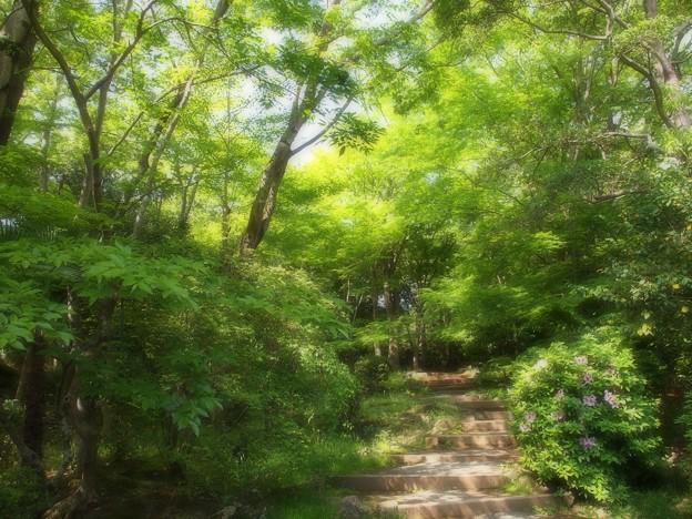 ふんわり初夏の緑林