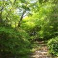 写真: ふんわり初夏の緑林