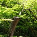 Photos: 若葉に覆われた小径