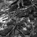 根元に広がる木洩れ陽