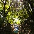 Photos: 春の木洩れ陽