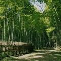 写真: 竹林の小径への誘い