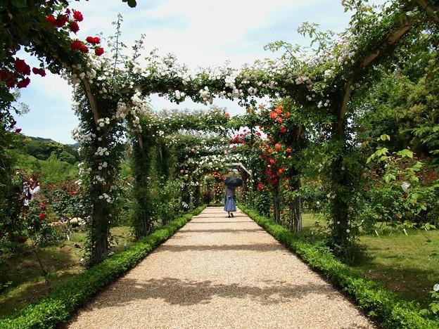 ローズガーデンの初夏~薔薇のアーチと日傘と