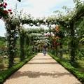 Photos: ローズガーデンの初夏~薔薇のアーチと日傘と