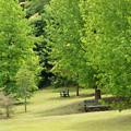 写真: 初夏の新緑に包まれて
