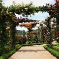 写真: Rose Garden