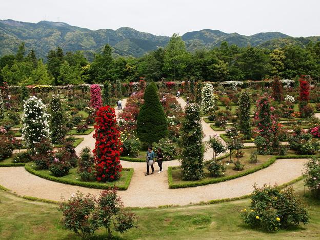 薔薇の庭園~仏蘭西流