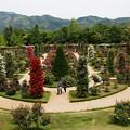 写真: 薔薇の庭園~仏蘭西流