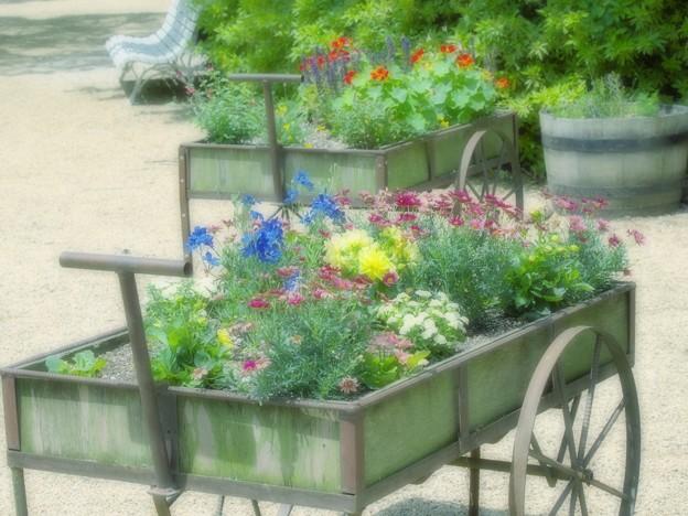 写真: 初夏の花車